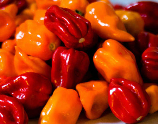 habanero cold cure